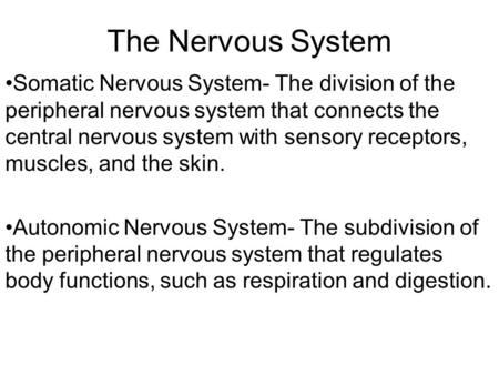 The Nervous System Somatic Nervous System- The division of the peripheral nervous system that connects the central nervous system with sensory receptors,