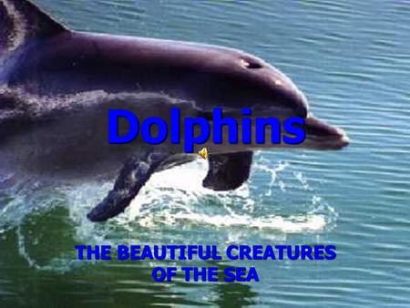 Dolphins THE BEAUTIFUL CREATURES OF THE SEA. My Personal Passion for Dolphins I have had a strong passion all my life for dolphins. As a child, my family.