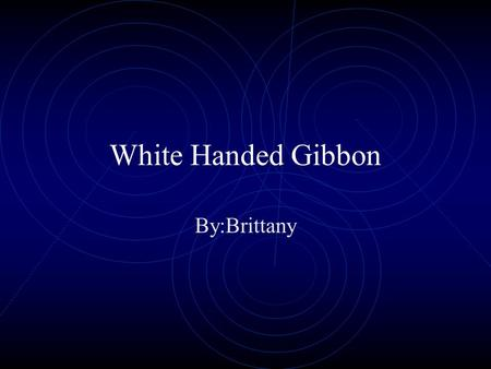 White Handed Gibbon By:Brittany Introduction My animal starts with a G and ends with an N. It lives in the rain forest. It has white and black fur. What.