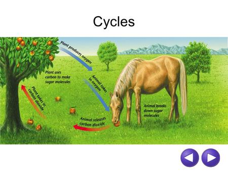 Cycles. CARBON-OXYGEN CYCLE  media//uploads/alberta/CarbonCycle.html
