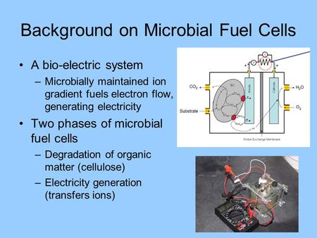 Background on Microbial Fuel Cells A bio-electric system –Microbially maintained ion gradient fuels electron flow, generating electricity Two phases of.