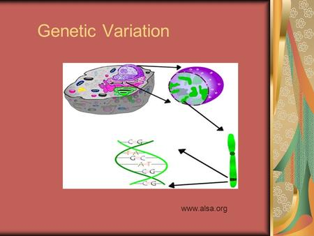 Genetic Variation www.alsa.org. Goal To learn the basic genetic mechanisms that determines the traits expressed by individuals in a population.