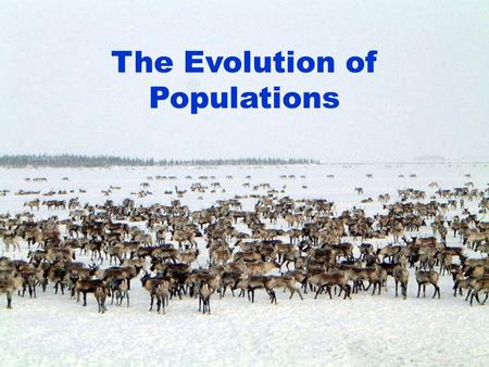 The Evolution of Populations. Organisms do not evolve. – Common misconception. – An organism's genes are fixed at birth. Populations are the smallest.