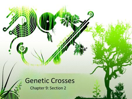 Genetic Crosses Chapter 9: Section 2. 5 Minute warm up Describe how Mendel artificially cross pollinated pea plants and how he prevented self fertilization.