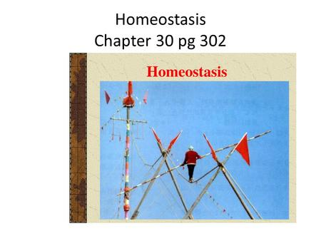 Homeostasis Chapter 30 pg 302. Objectives of class To define what is meant by the external and internal environment To Define homeostasis To investigate.