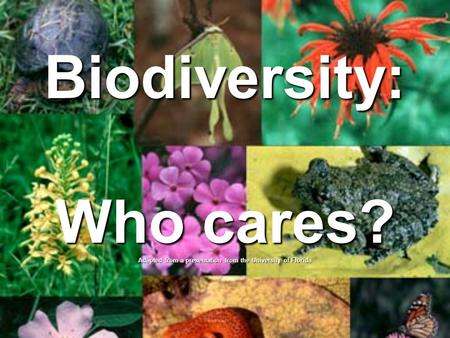 Biodiversity: Who cares? Adapted from a presentation from the University of Florida.