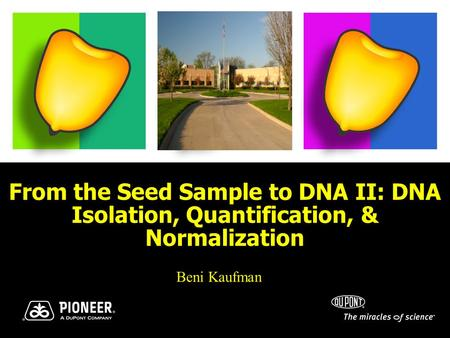 From the Seed Sample to DNA II: DNA Isolation, Quantification, & Normalization Beni Kaufman.