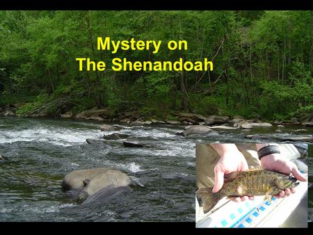 Mystery on The Shenandoah. Early Spring 2004 It all started with a phone call…. North Fork Shenandoah.