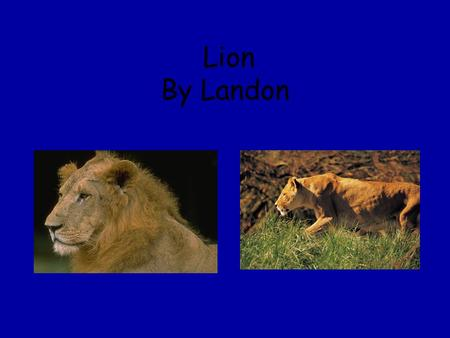 Lion By Landon. Babies The babies are born alive. The babies stay with its parents until they are about 3 ½.