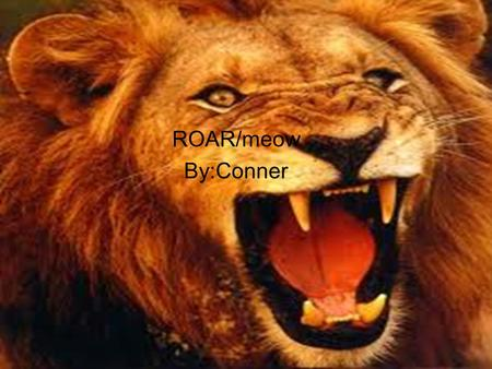 Lion ROAR/meow By:Conner.