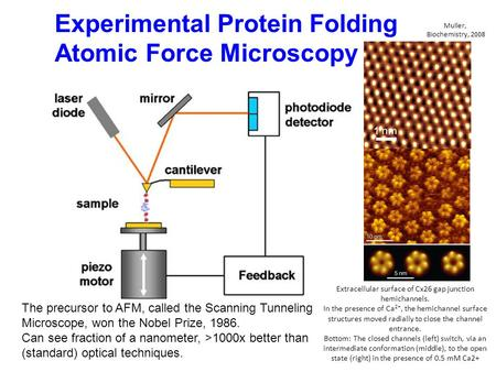 Experimental Protein Folding Atomic Force Microscopy The precursor to AFM, called the Scanning Tunneling Microscope, won the Nobel Prize, 1986. Can see.