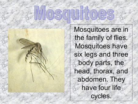 Mosquitoes are in the family of flies. Mosquitoes have six legs and three body parts, the head, thorax, and abdomen. They have four life cycles.