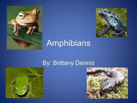 Amphibians By: Brittany Dennis. Amphibian Facts The name of the Amphibians class is Amphibia. There are 3 main orders. These are: Anura (frogs and toads)