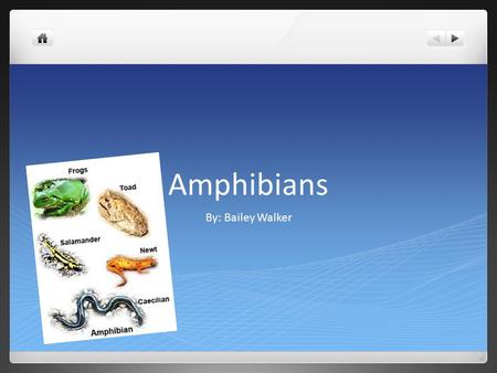 Amphibians By: Bailey Walker. Key Characteristics Unshelled eggs Permeable skin Carnivorous adults Cold blooded 3 chambered hearts.