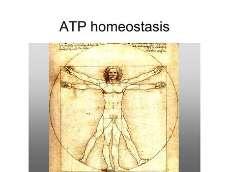 ATP homeostasis. Energy systems homeostasis ATP –Common metabolic intermediate –Powers muscular contraction –Cell work –Well-maintained over wide variations.