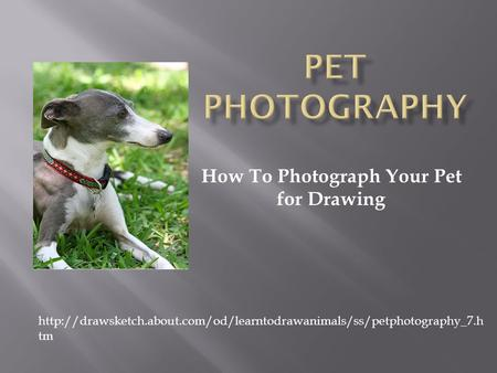 How To Photograph Your Pet for Drawing  tm.
