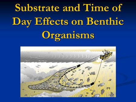Substrate and Time of Day Effects on Benthic Organisms.