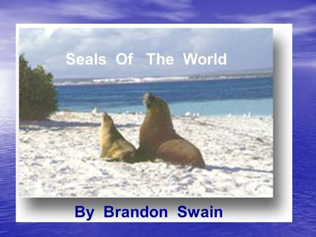 "Seals Of The World By Brandon Swain. Seals Of The World !!!!! This is a Power Point about seals across the world. There are more than 35 species!!!! ""There."