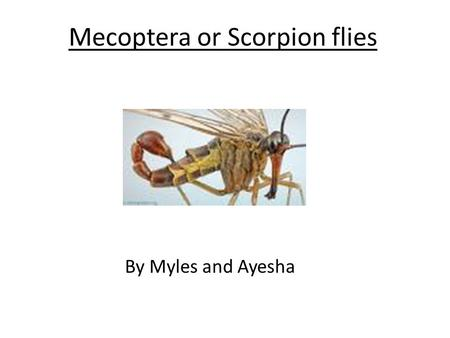 "Mecoptera or Scorpion flies By Myles and Ayesha. Introduction This is a Power Point all about ""Scorpion Flies"" have a look through it and hope u like."
