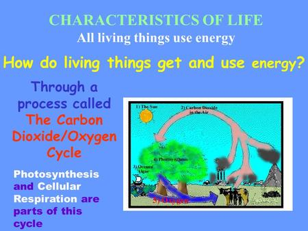 CHARACTERISTICS OF LIFE All living things use energy How do living things get and use energy ? Through a process called The Carbon Dioxide/Oxygen Cycle.