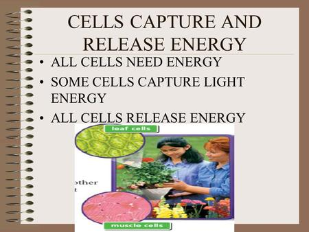 CELLS CAPTURE AND RELEASE ENERGY ALL CELLS NEED ENERGY SOME CELLS CAPTURE LIGHT ENERGY ALL CELLS RELEASE ENERGY.