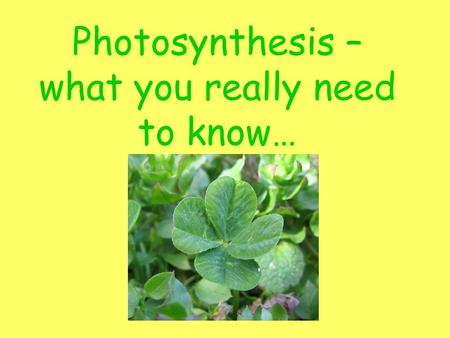 Photosynthesis – what you really need to know…. Warm Up #1 1.Give an example of an autotroph. 2.List 2 examples of a heterotroph. 3.Where is the energy.