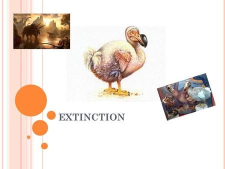 EXTINCTION. W HAT IS E XTINCTION ? Extinction is were animals are no longer around and are gone forever like the dinosaurs and dodo's and the mammoth!