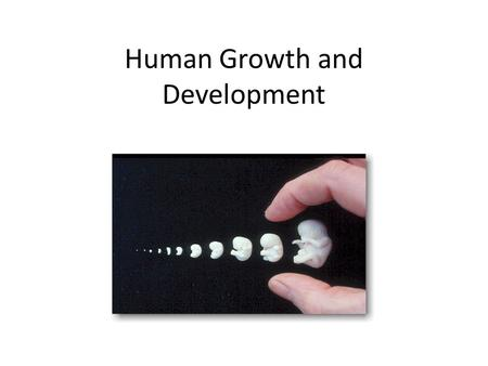 Human Growth and Development. Zygote When a sperm carrying ______ the necessary DNA combines with an egg containing _____ the necessary DNA combine a.