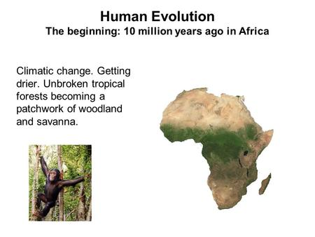 Human Evolution The beginning: 10 million years ago in Africa Climatic change. Getting drier. Unbroken tropical forests becoming a patchwork of woodland.
