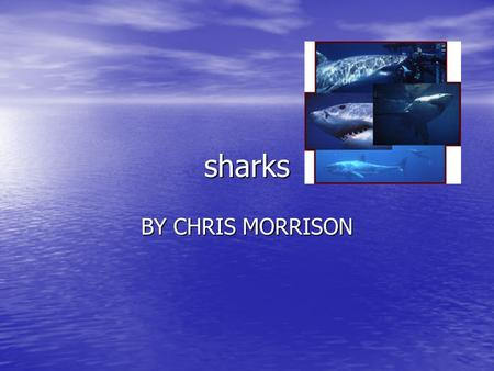 Sharks BY CHRIS MORRISON. Interesting facts If sharks were to stop moving they would sink down into the water If sharks were to stop moving they would.