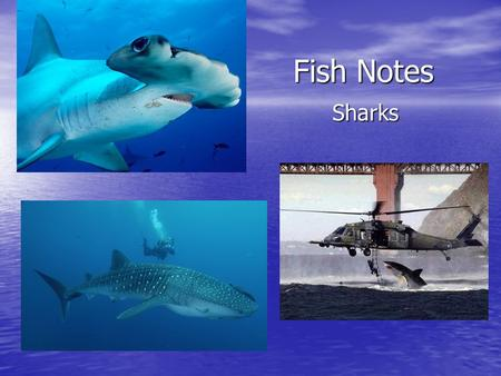 all about shark cartilage essay Easy science for kids shark family - learn fun facts about animals, the human   sharks, unlike most fish, don't have bones, but cartilage, which is a soft, sinewy.