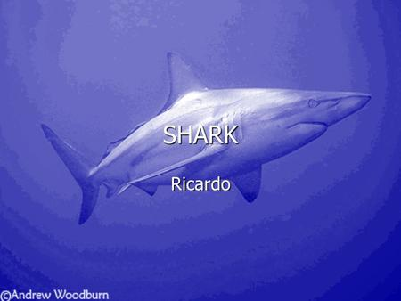 SHARK Ricardo Bull sharks are the most dangerous shark in the world. Bull sharks are the most dangerous shark in the world. His fin is as big as a person.