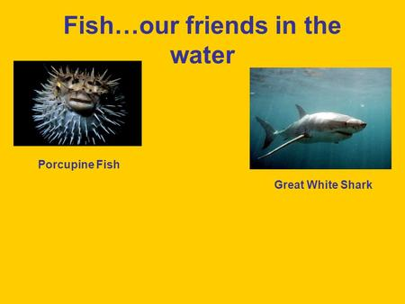 Fish…our friends in the water Porcupine Fish Great White Shark.