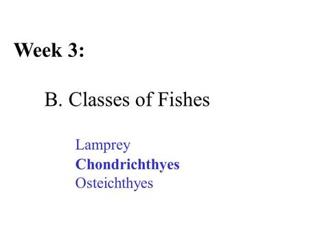 Week 3: B. Classes of Fishes Lamprey Chondrichthyes Osteichthyes.