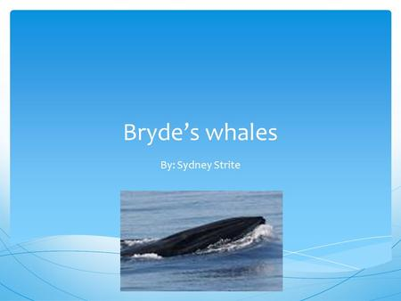 Bryde's whales By: Sydney Strite. Bryde's whales are named after Johan Bryde. He helped construct the first Whaling factory. Bryde's Whales.