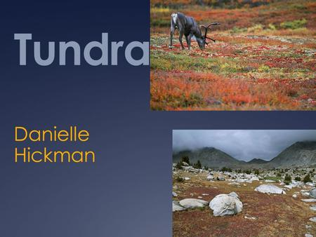 Tundra Danielle Hickman. What is a Tundra  a vast, flat, treeless Arctic region of Europe, Asia, and North America in which the subsoil is permanently.