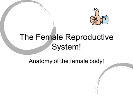 The Female Reproductive System! Anatomy of the female body!