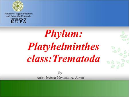 Phylum: Platyhelminthes class:Trematoda By Assist. lecturer Maytham A. Alwan.