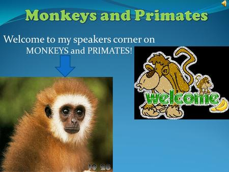 Welcome to my speakers corner on MONKEYS and PRIMATES!