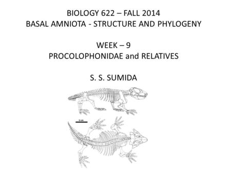 BIOLOGY 622 – FALL 2014 BASAL AMNIOTA - STRUCTURE AND PHYLOGENY WEEK – 9 PROCOLOPHONIDAE and RELATIVES S. S. SUMIDA.
