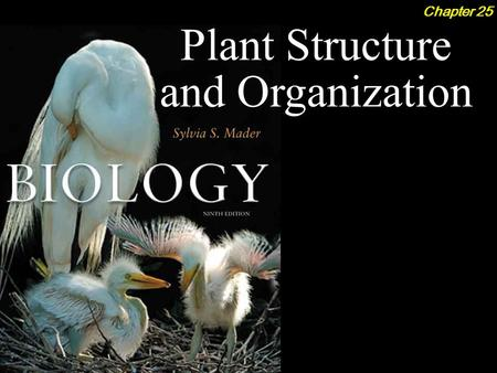 Plant Structure and Organization Chapter 25. Plant Structure and Organization 2Outline Plant Organs  Roots  Stems  Leaves Monocots vs. Eudicots Epidermal.