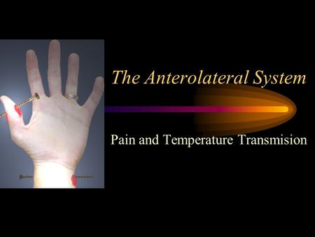 The Anterolateral System Pain and Temperature Transmision.