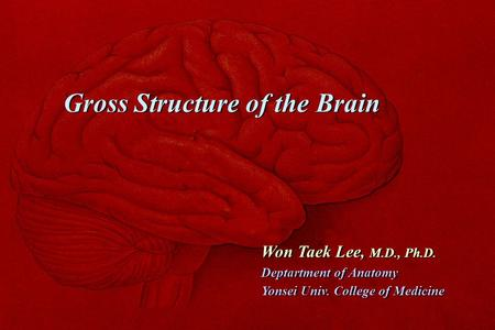Gross Structure of the Brain Won Taek Lee, M.D., Ph.D. Deptartment of Anatomy Yonsei Univ. College of Medicine Won Taek Lee, M.D., Ph.D. Deptartment of.