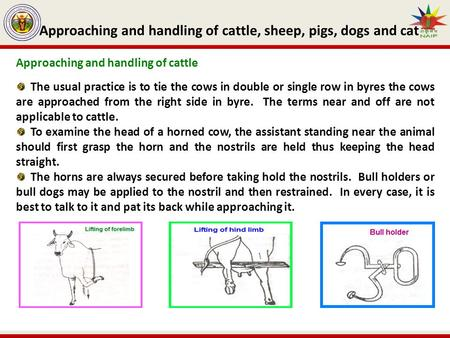 Approaching and handling of cattle, sheep, pigs, dogs and cat Approaching and handling of cattle The usual practice is to tie the cows in double or single.