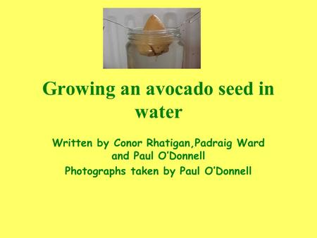 Growing an avocado seed in water Written by Conor Rhatigan,Padraig Ward and Paul O'Donnell Photographs taken by Paul O'Donnell.