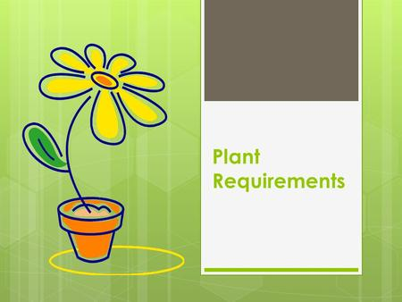 Plant Requirements. Plant Needs  Photosynthesis  Light  Air  Water  Growing Media.