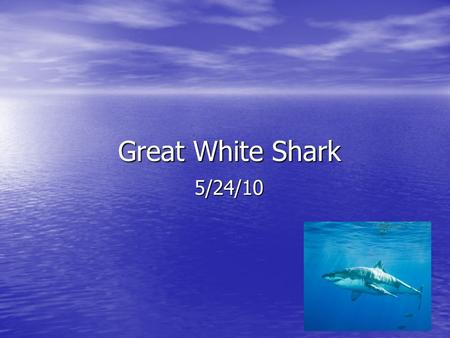 Great White Shark Great White Shark 5/24/10. Introduction Do you want to learn about the amazing Great White Shark ? If so you will learn about the Great.