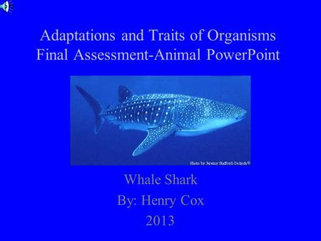 Adaptations and Traits of Organisms Final Assessment-Animal PowerPoint Whale Shark By: Henry Cox 2013.