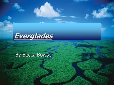 Everglades By Becca Bowser.