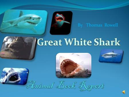 By Thomas Rowell There are five different groups of animals with vertebrates Mammals Fish Reptiles Birds Amphibians.
